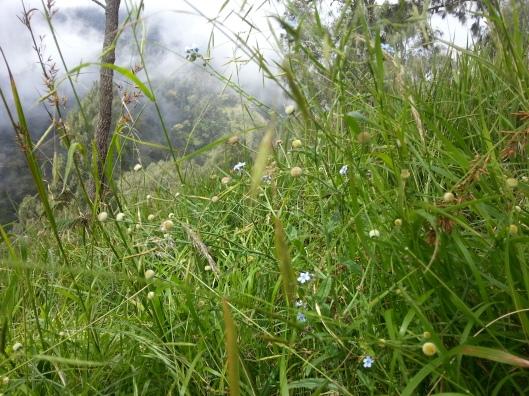 #11 - tgh duduk kepenatan.. pastu ambil gambar rumput kat sebelah muka.. HAHA..