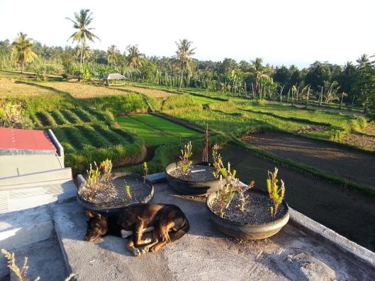 Seperti biasa di Indonesia.. kebersepahan anjing, dah macam kucing..
